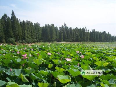 湖北武汉天气预报一周7天10天15天