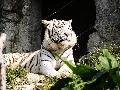 广州香江野生动物世界天气